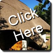 Thatch Roofs - Houses and Lodges