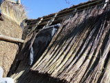 A Thatch roof in the process of being thatched with a fire blanket