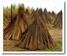 Thatch Suppliers - Cape Reed