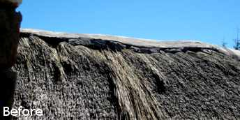 thatch covering cape town